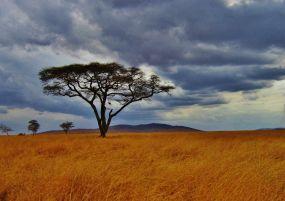 Екскурзия в ТАНЗАНИЯ -  сафари в Танзания и почивка на остров Занзибар - със самолет и обслужване на български език!