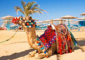 Почивка в ЕГИПЕТ - ХУРГАДА - Специална ваканционна програма за всички възрасти!
